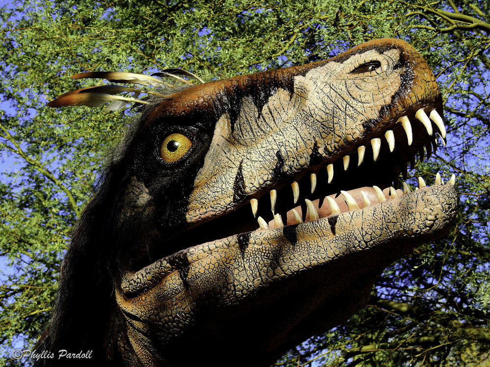Dinosaurs in the Desert-30.jpg