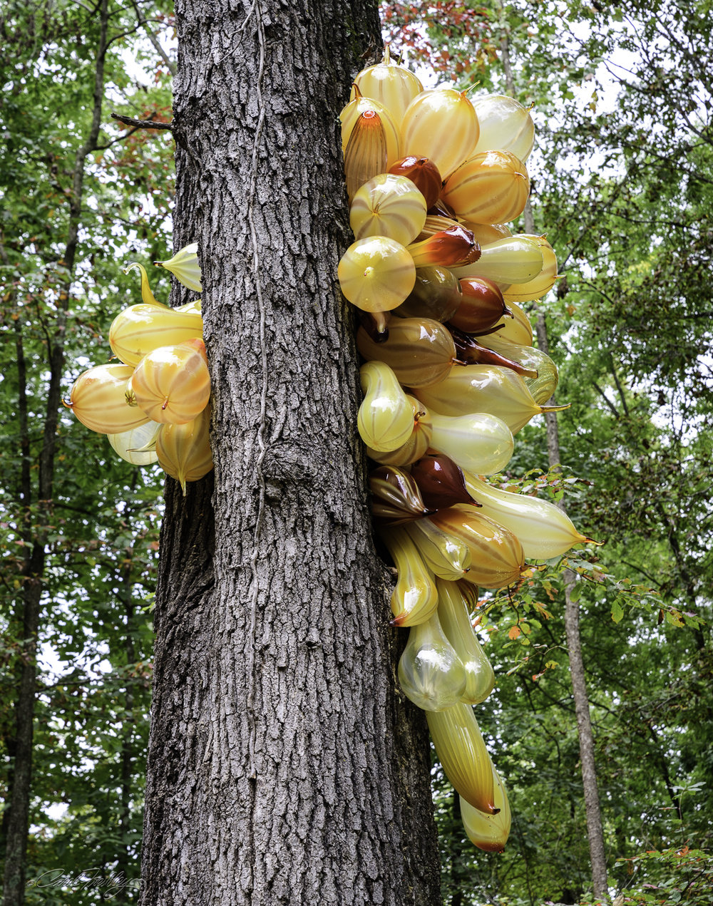 Chihuly in the Forest-46-22.jpg