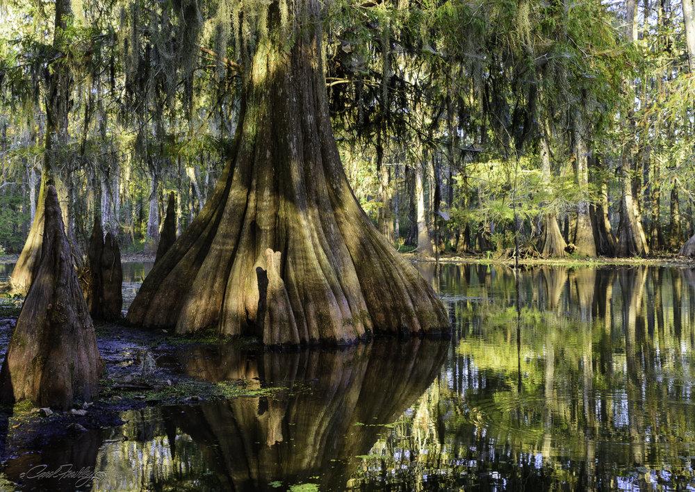 Lake Martin Swamp-36.jpg