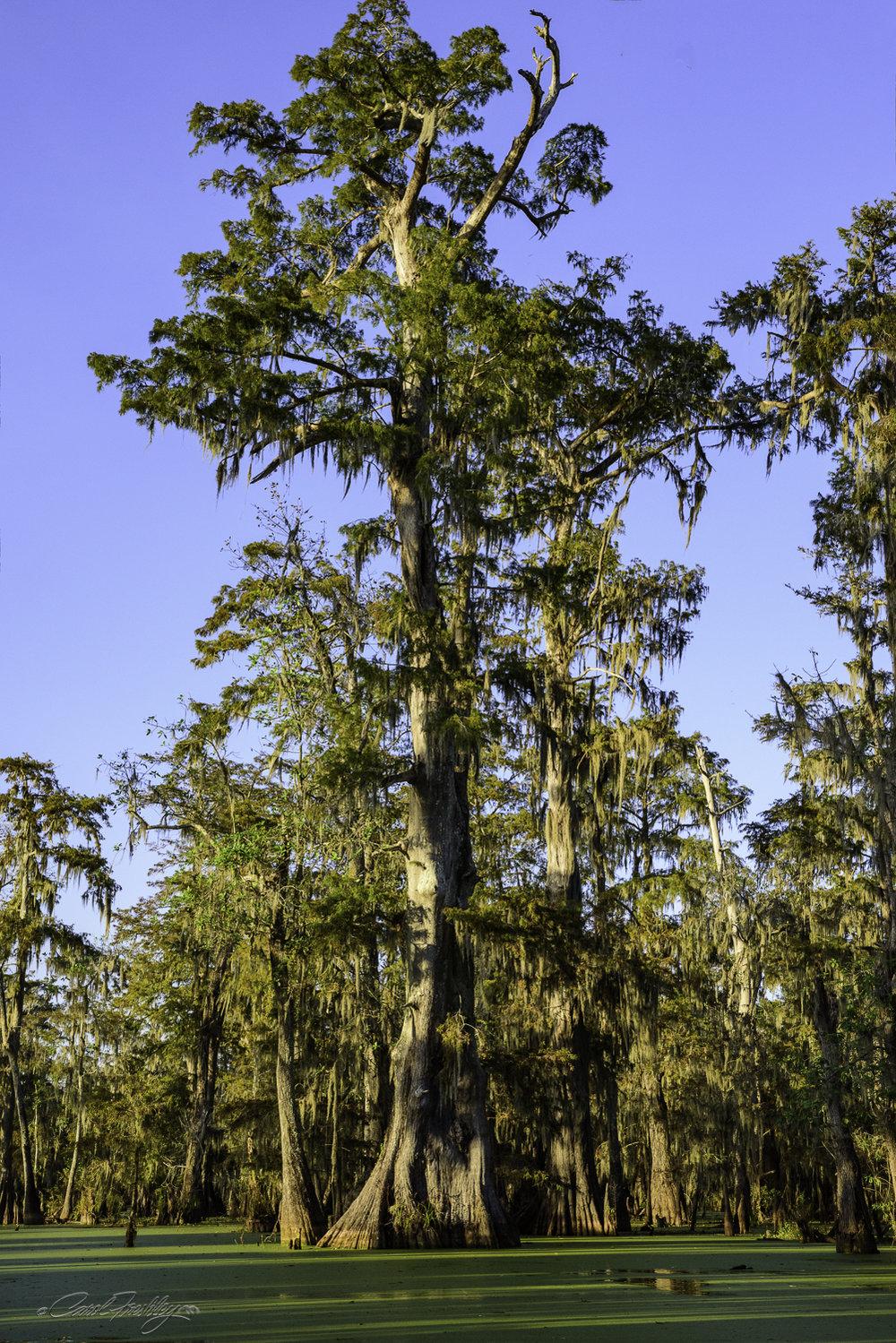 Lake Martin Swamp-50.jpg