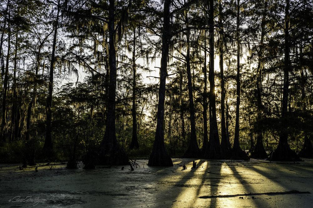 Lake Martin Swamp-86.jpg