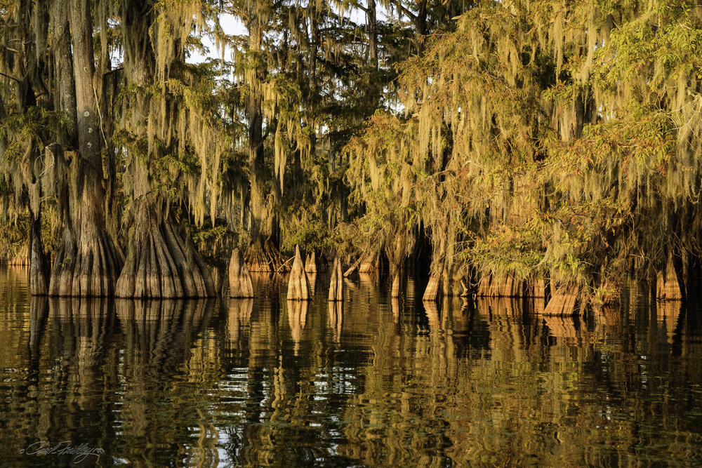 Lake Martin Swamp-127.jpg