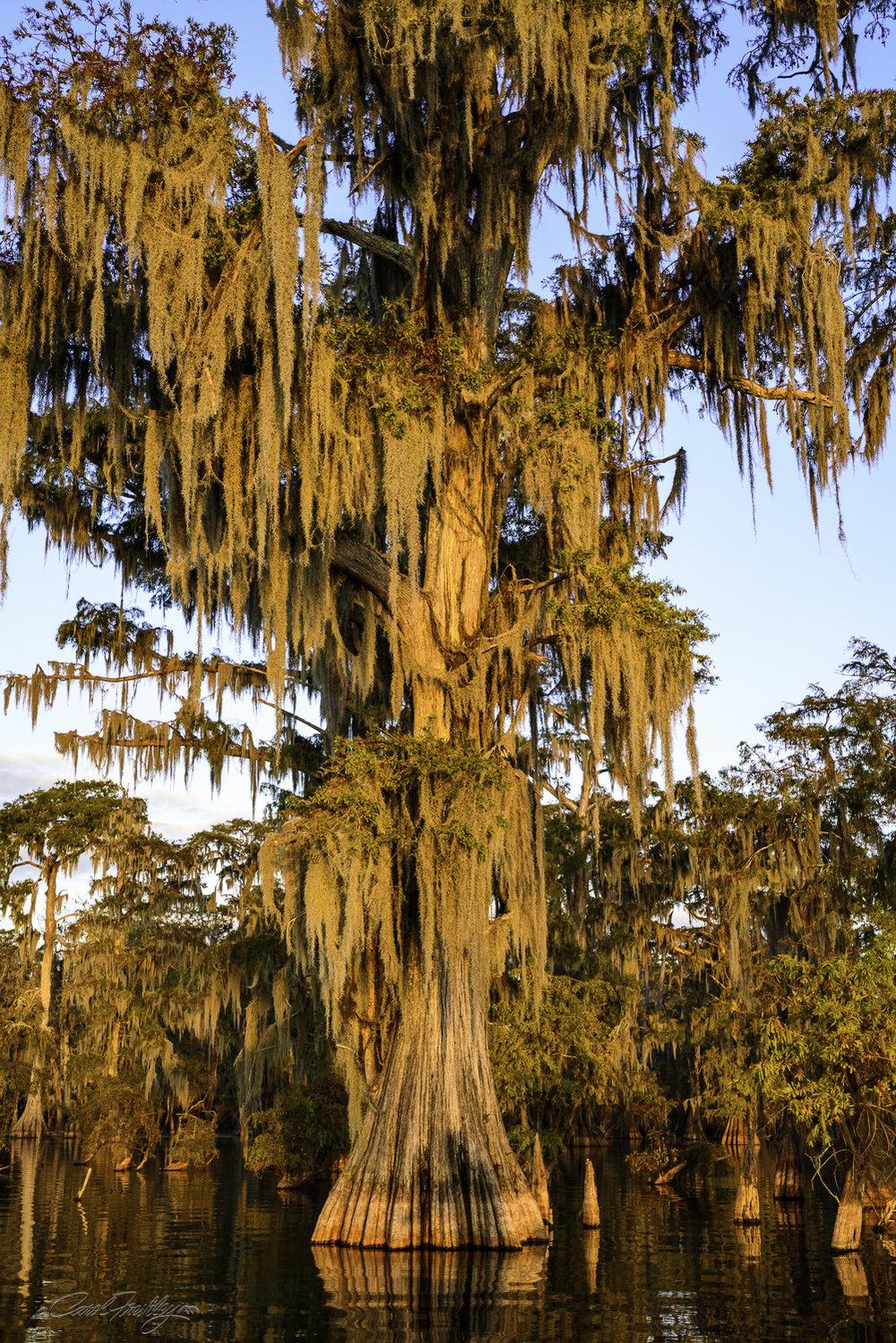Lake Martin Swamp-153.jpg
