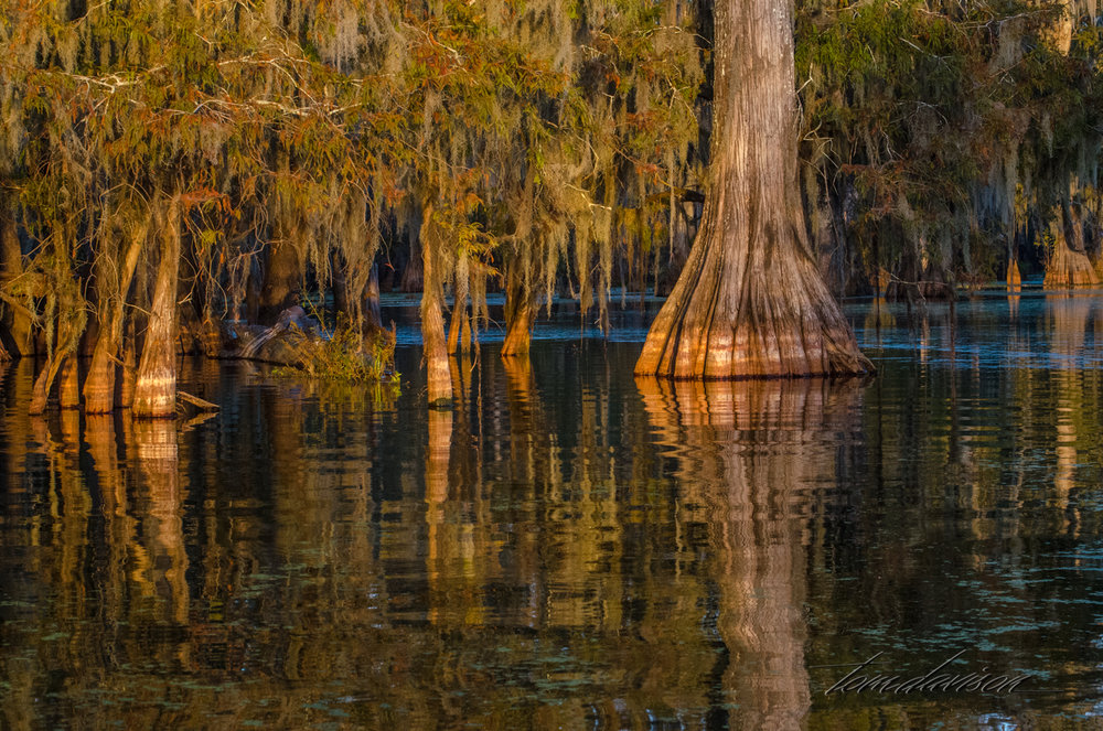 TD Swamp (311 of 48).jpg