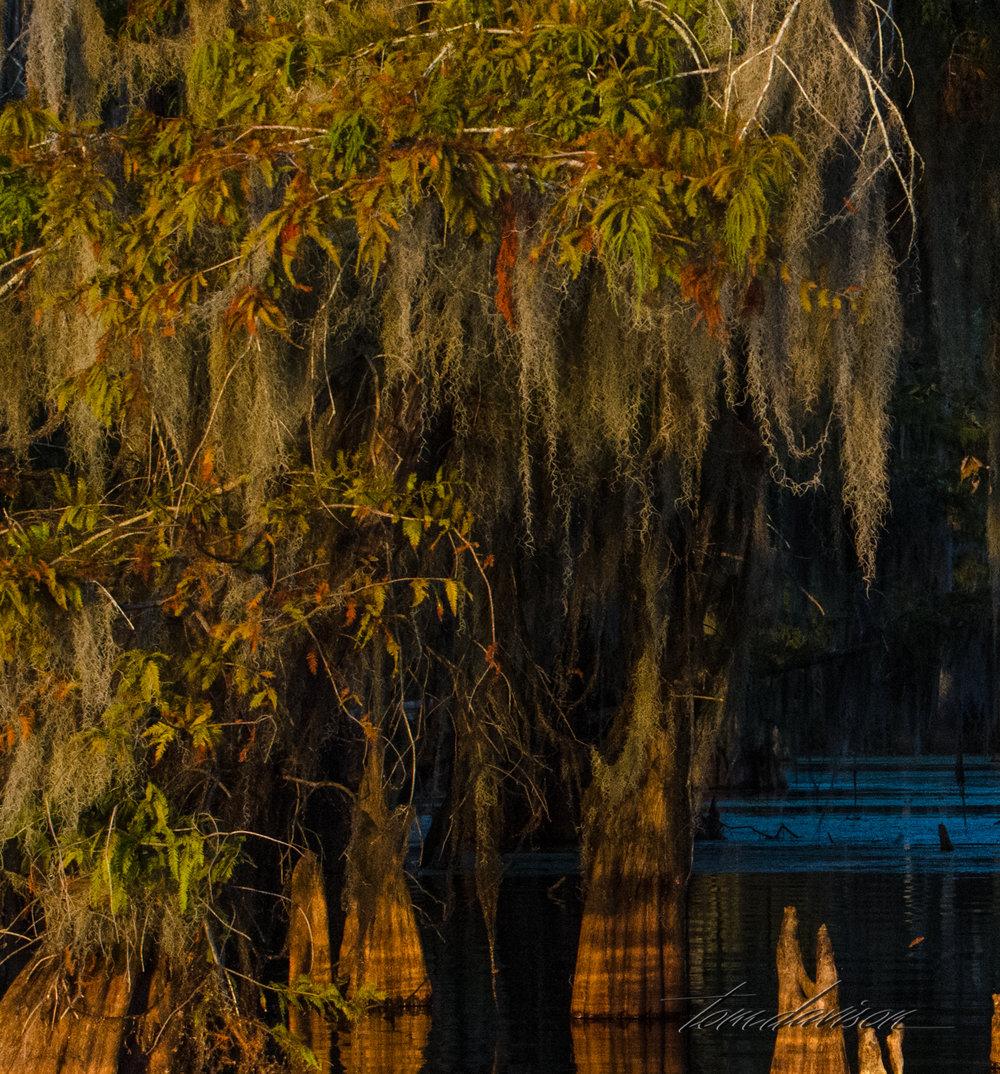 TD Swamp (313 of 48).jpg
