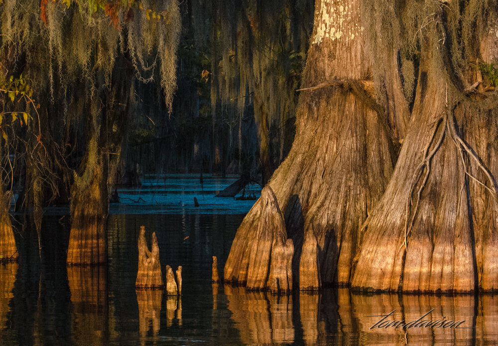 TD Swamp (312 of 48).jpg