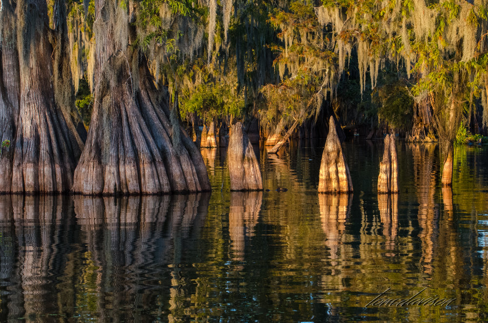 TD Swamp (314 of 48).jpg