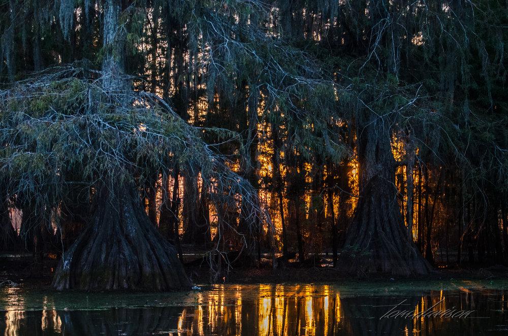 TD Swamp (317 of 48).jpg