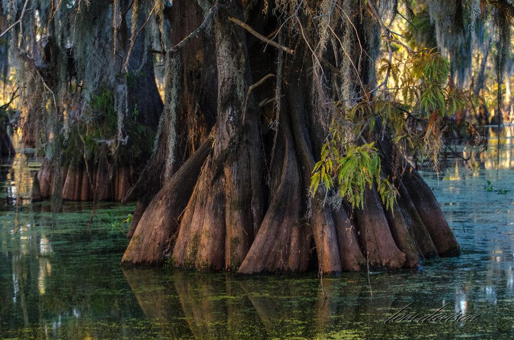 TD Swamp (309 of 48).jpg