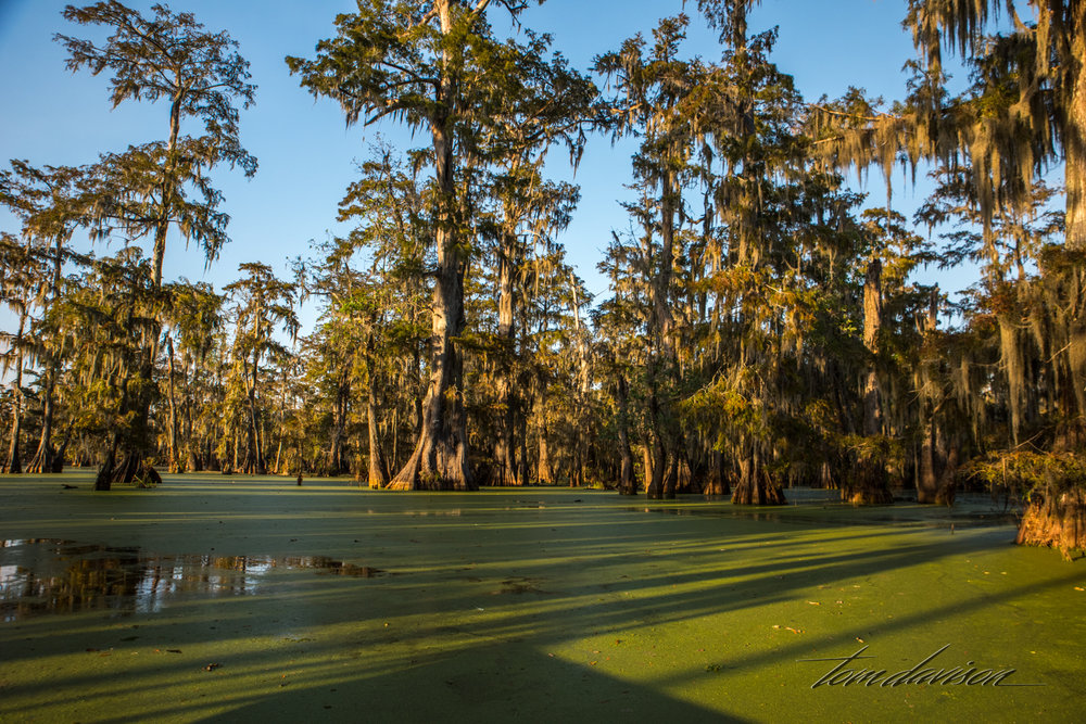 TD Swamp (321 of 48).jpg