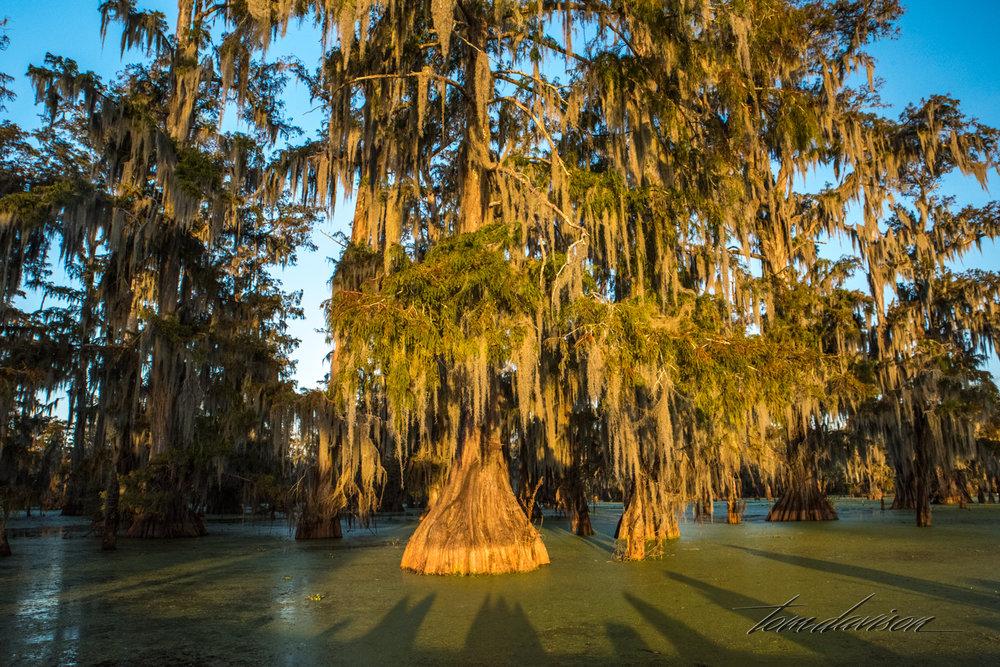 TD Swamp (331 of 48).jpg