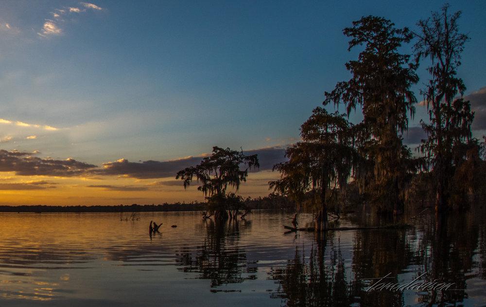 TD Swamp (346 of 48).jpg