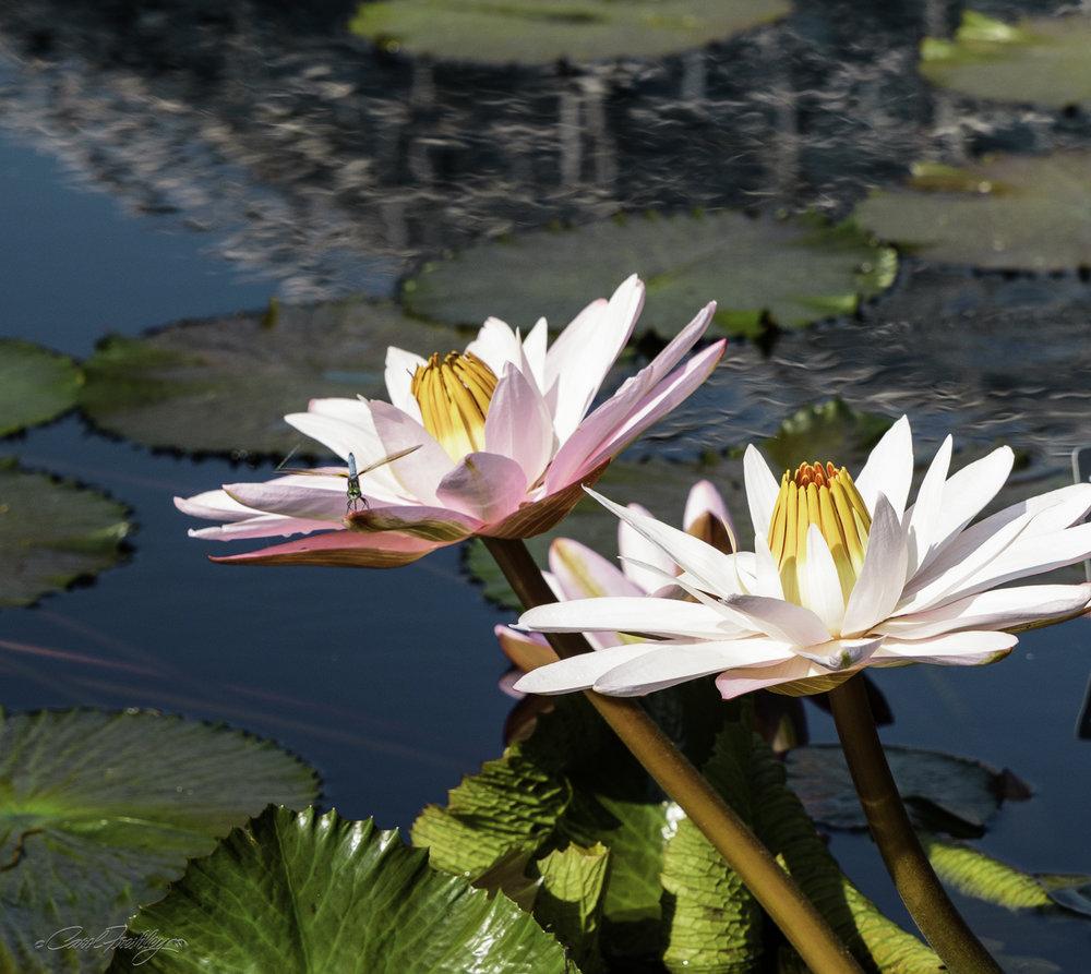 MO Botanical Gardens-5.jpg