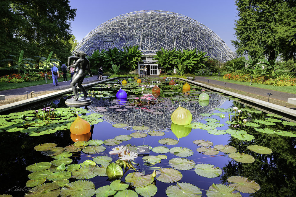 There are two large pools in front of the Climatron. Each is different but shares some elements such as the Chihuly glass, the sculptures and abundant water plants.