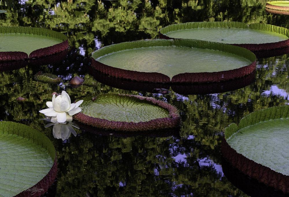 MO Botanical Gardens-9.jpg
