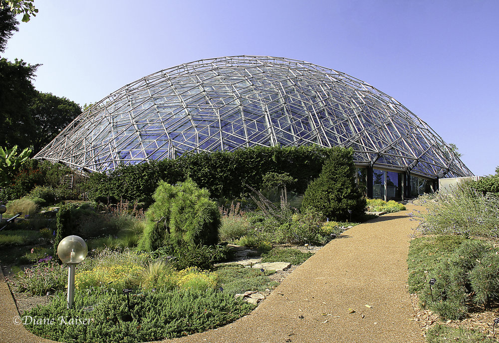 This is the huge Climatron, the first geodesic dome to be used as a conservatory. The dome incorporates the principles of R. Buckminster Fuller, inventor of the geodesic system. The Climatron is home to the world's tropical plants and ecosystems, housing some of the world's rarest plants.