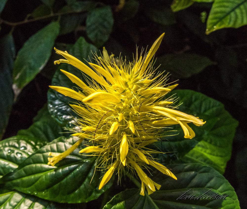 TD Botanical (375 of 98).jpg