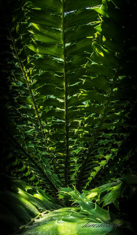 TD Botanical (374 of 98).jpg