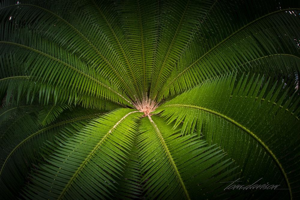 TD Botanical (378 of 98).jpg