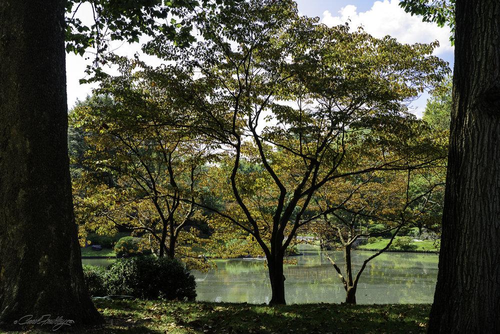 MO Botanical Gardens-41.jpg