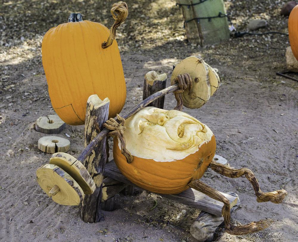 Todd Pumpkins-11.jpg