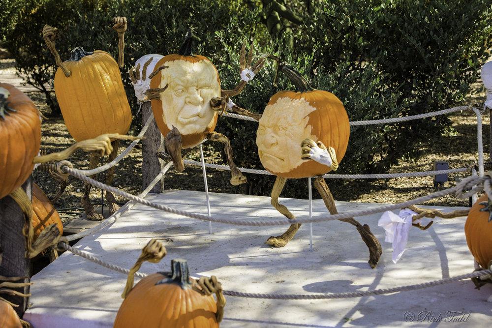 Todd Pumpkins-12.jpg