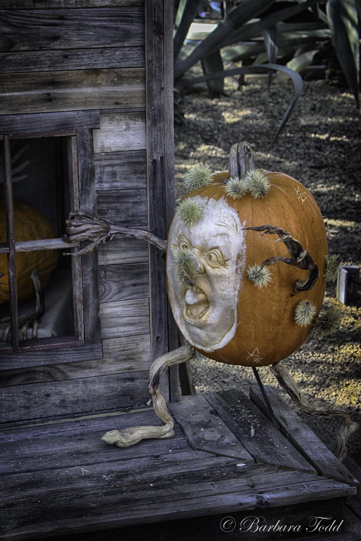 Todd Pumpkins-13.jpg