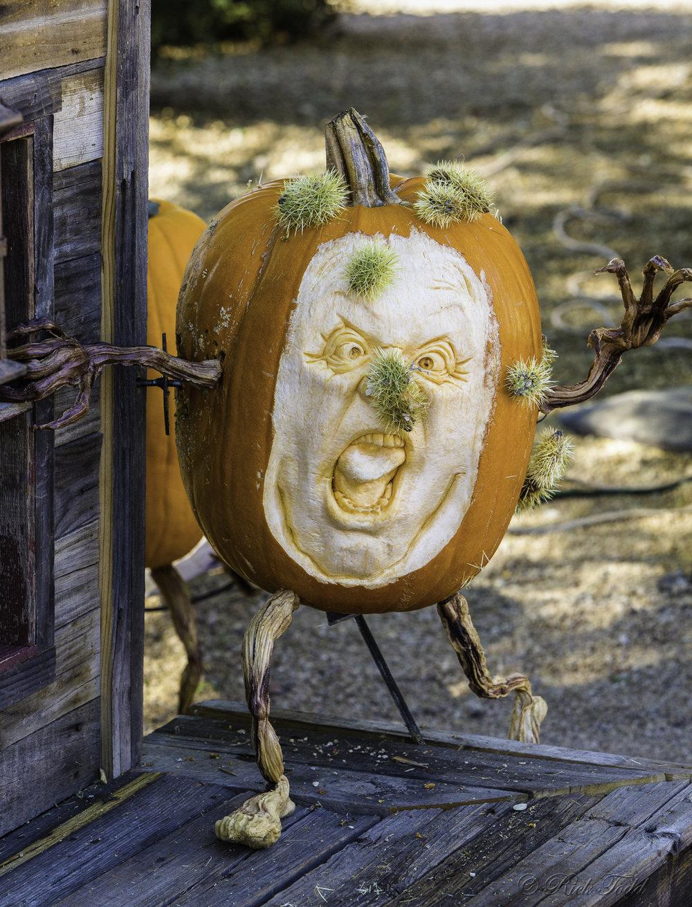 Todd Pumpkins-3.jpg