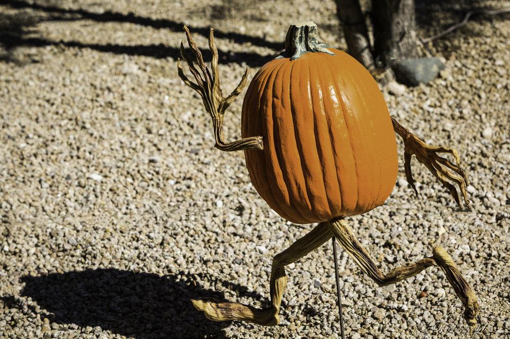 Todd Pumpkins-6.jpg