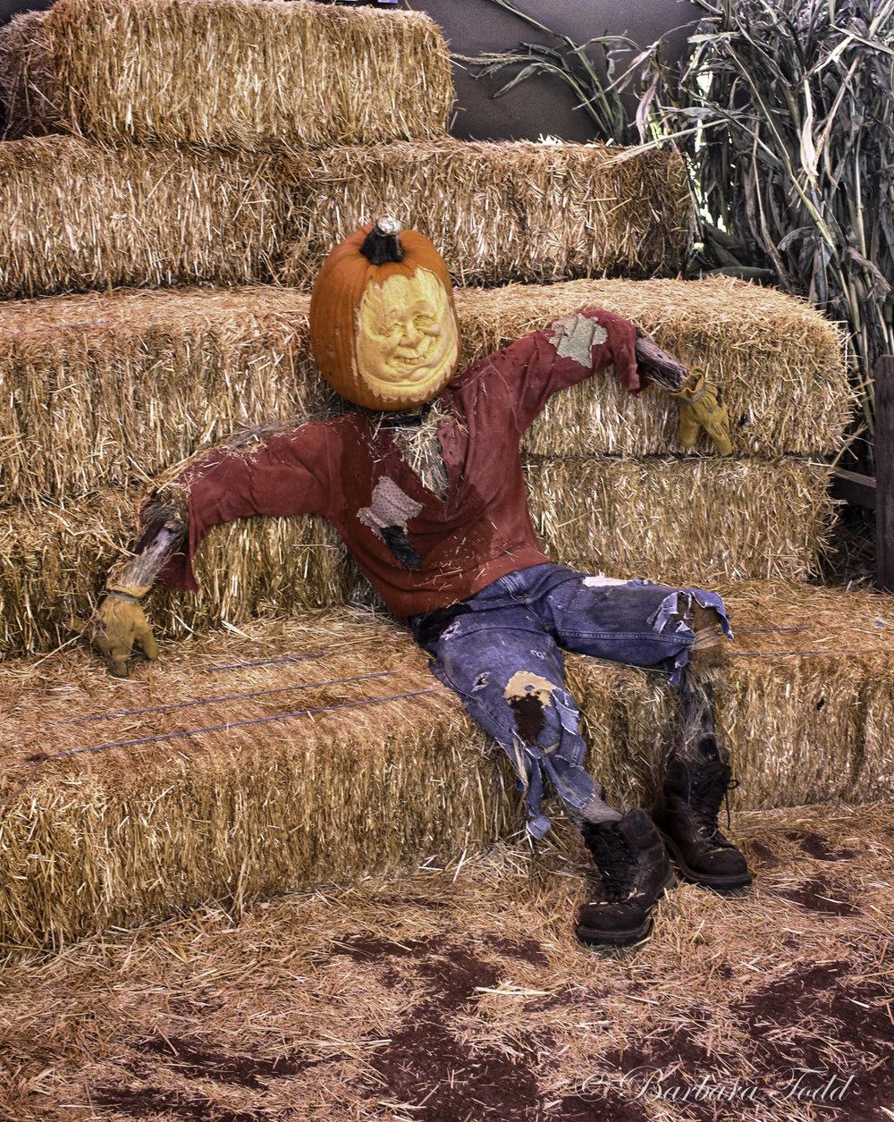 Todd Pumpkins-21.jpg