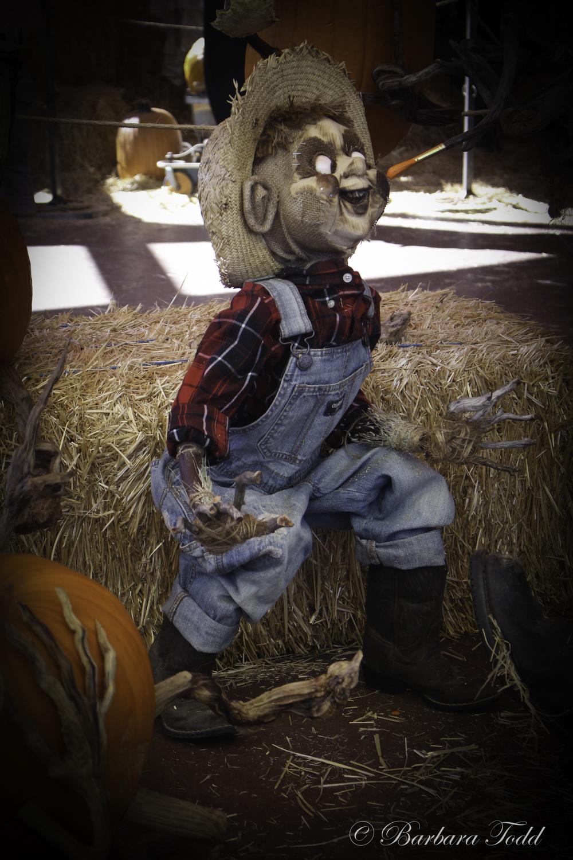 Todd Pumpkins-18.jpg