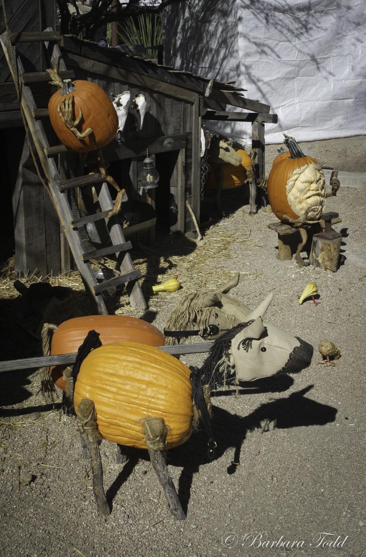 Todd Pumpkins-14.jpg