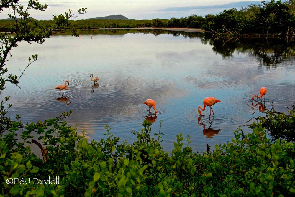 Galapagos Islands=2008