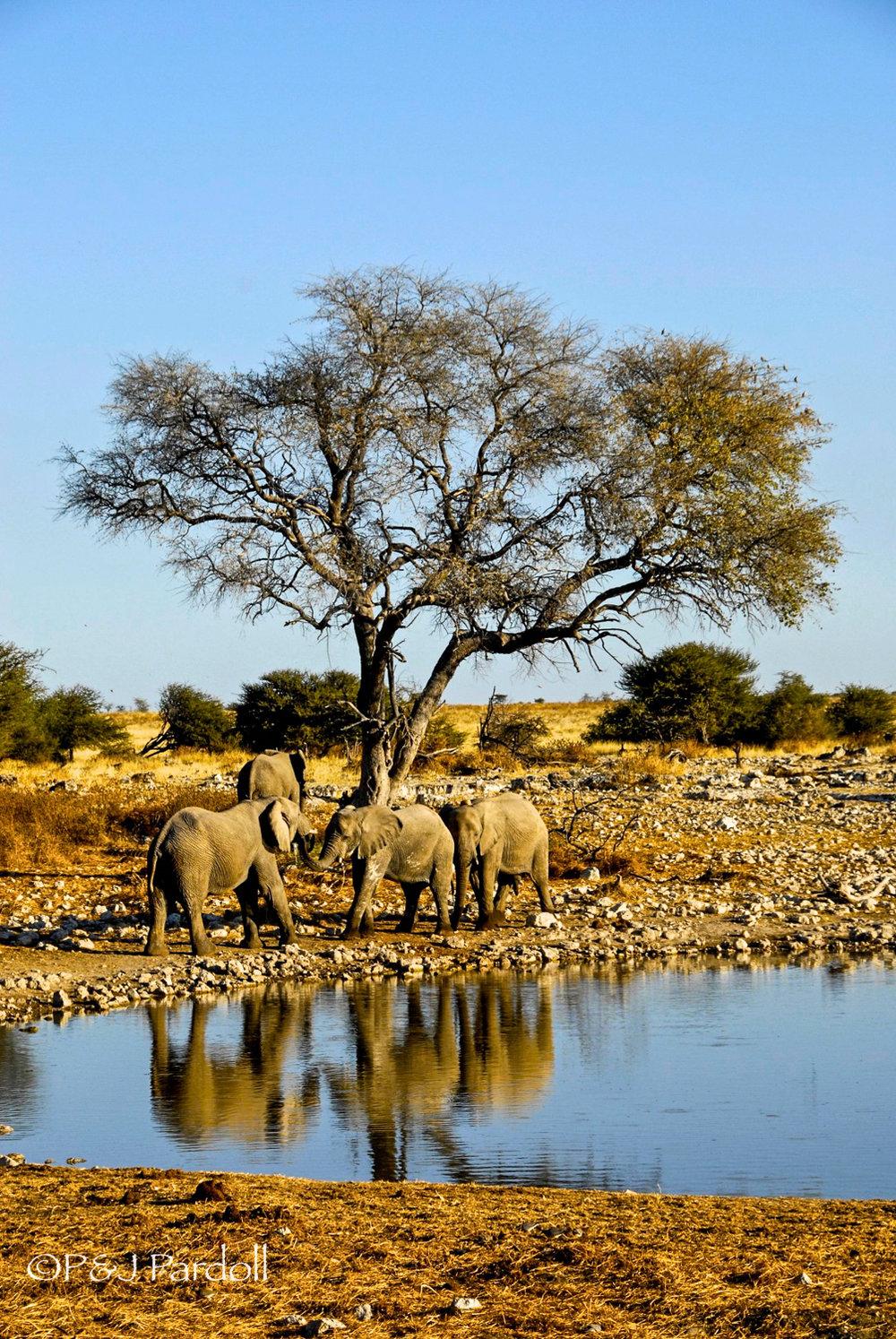 Etosha Park, Namibia-2009