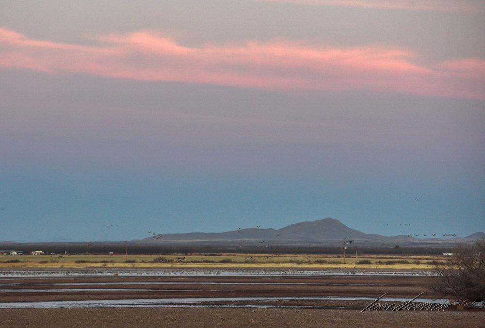 Looking westward across the pond.