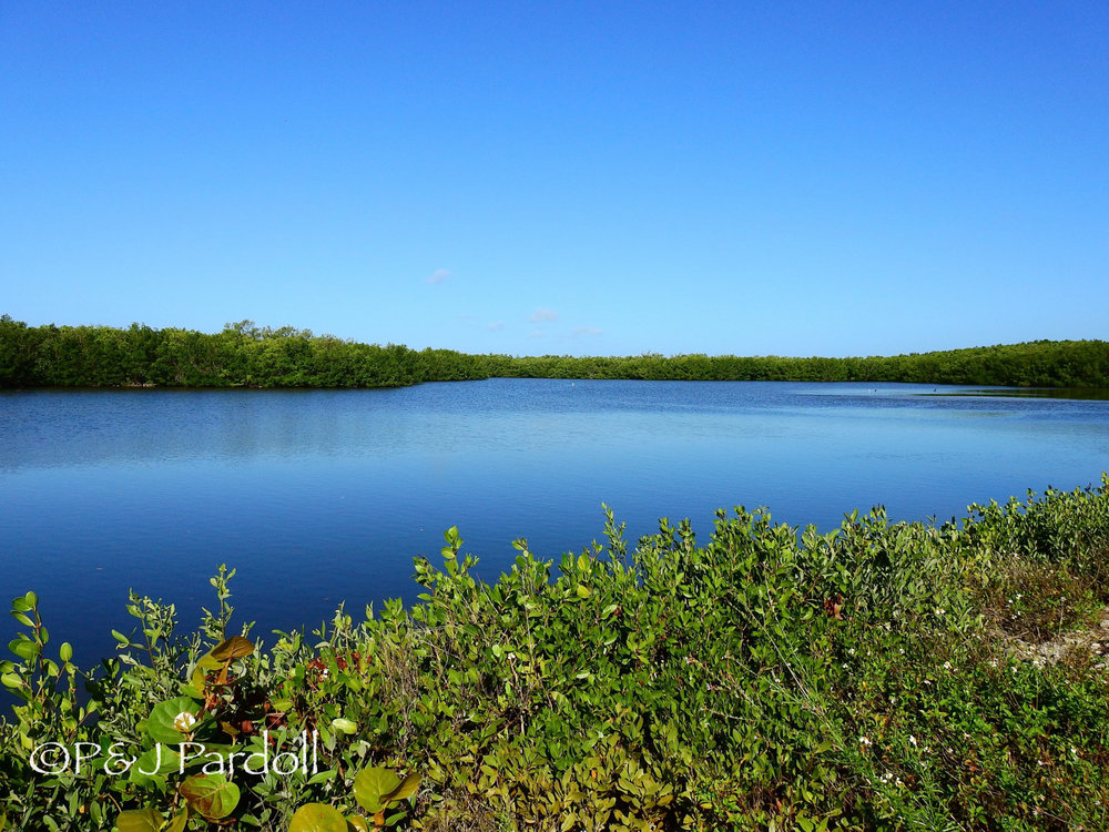 One of the mangrove ponds