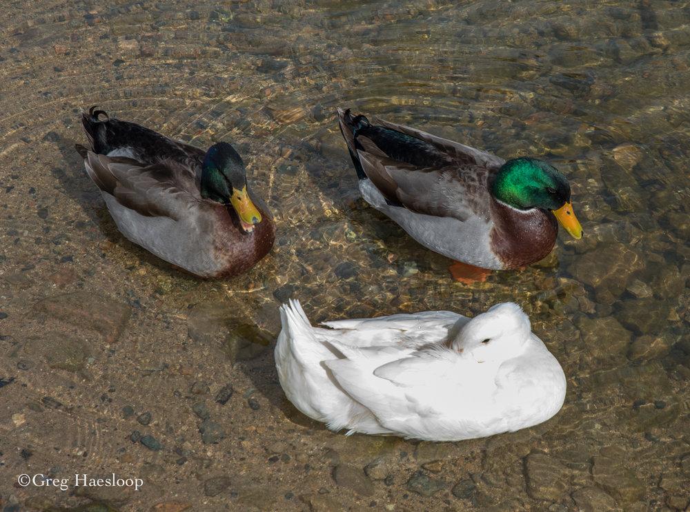 GH Watson Lake-8.jpg