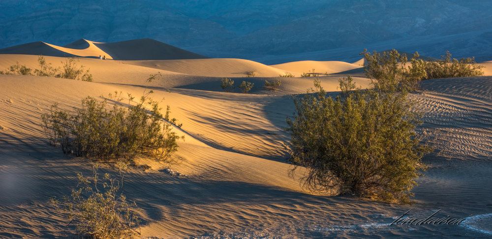 Dunes TD-3.jpg