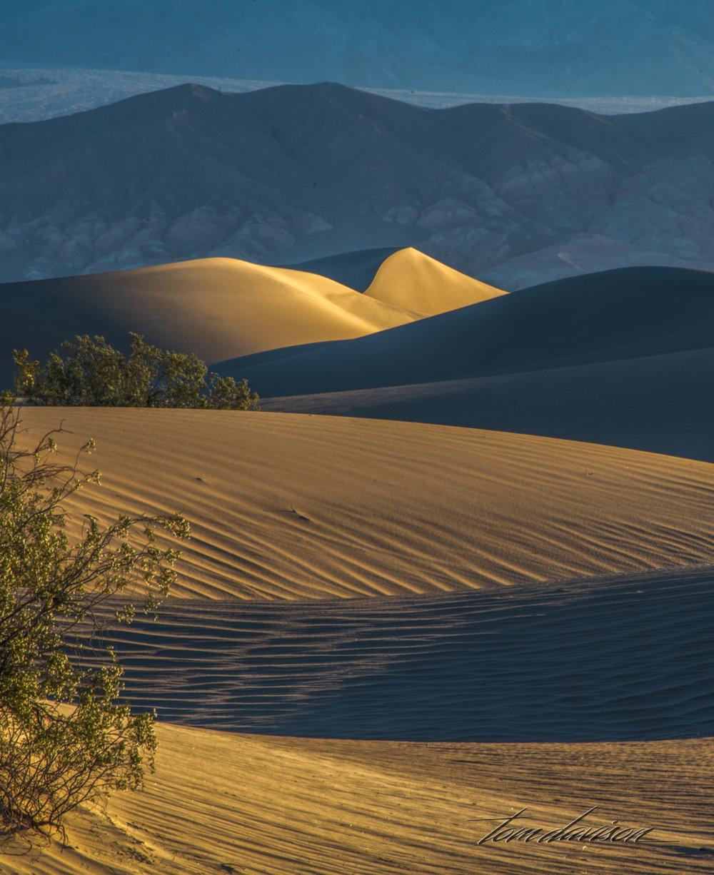 Dunes TD-8.jpg