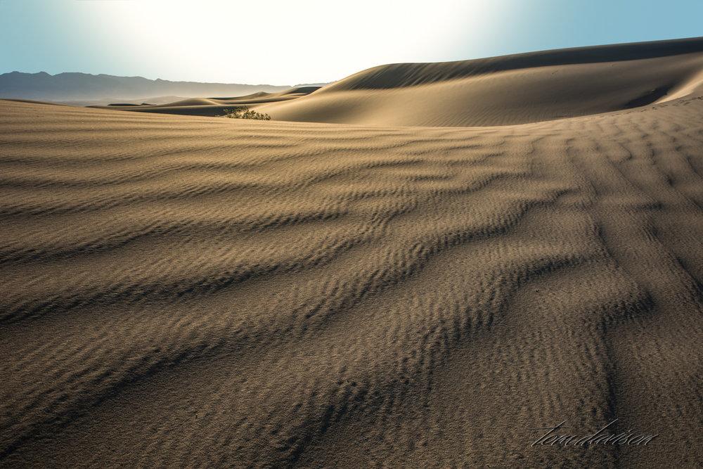 Dunes TD-13.jpg