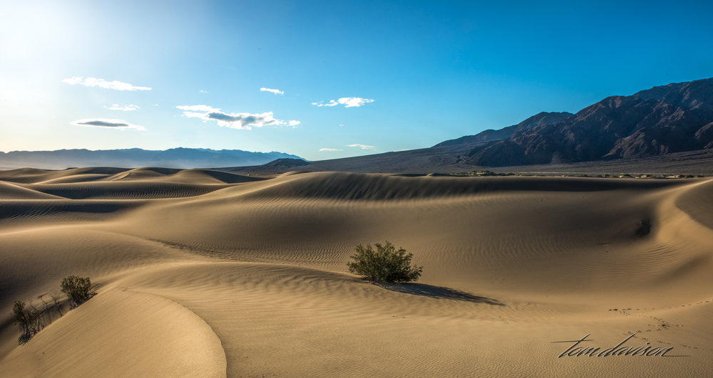 Dunes TD-14.jpg