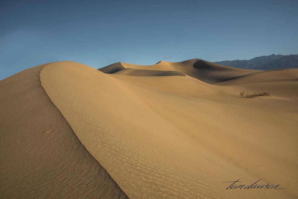 Dunes TD-16.jpg