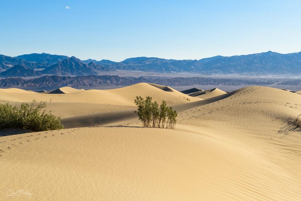 Mesquite Flat Sand Dunes-26.jpg