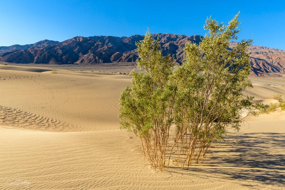 Mesquite Flat Sand Dunes-28.jpg