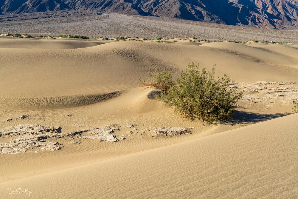 Mesquite Flat Sand Dunes-31.jpg