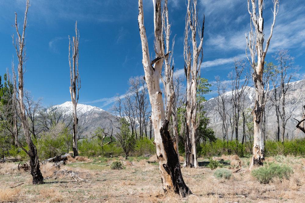 Pine Creek-12.jpg
