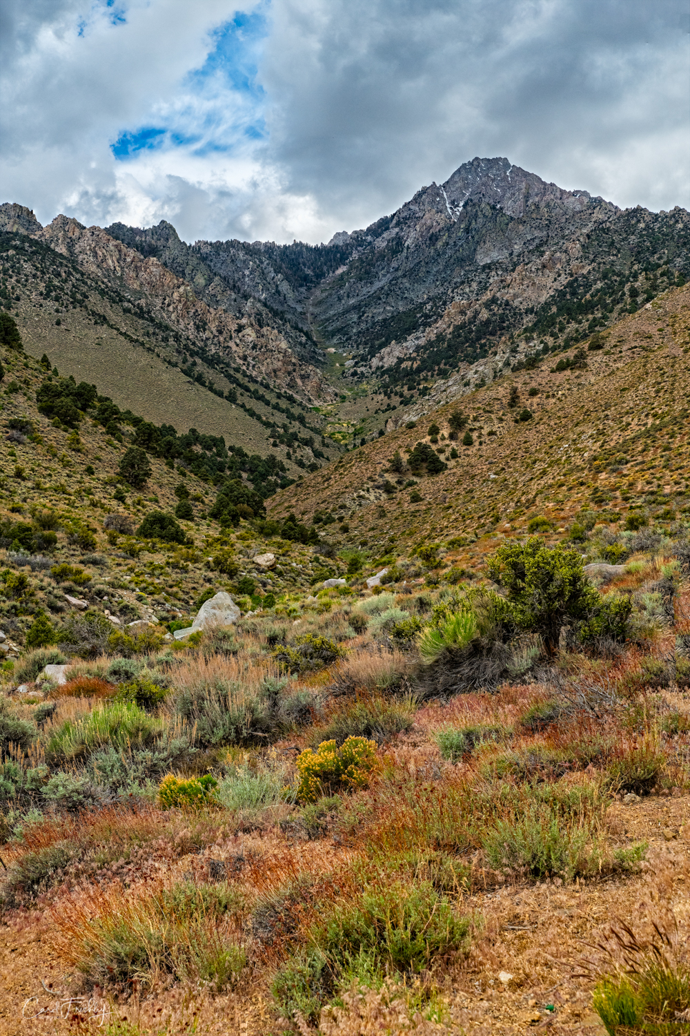Onion Valley-6.jpg