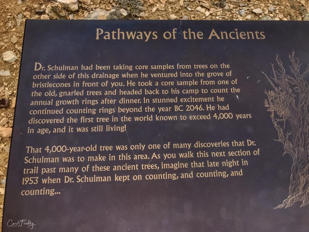 Ancient Bristlecones-15.jpg