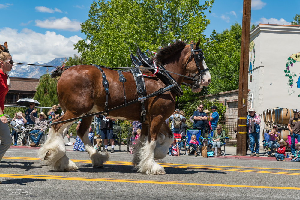 Mule Days Parade-23.jpg
