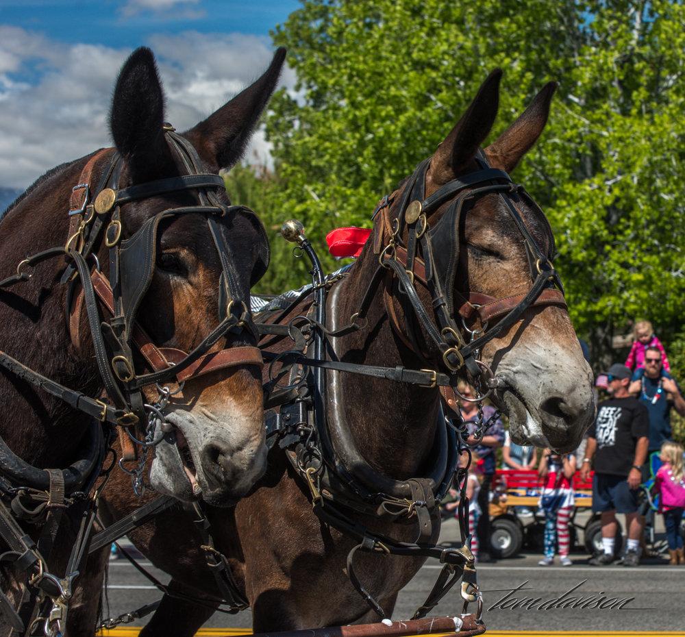 Mule Days TD-5.jpg